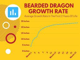 How Fast Do Bearded Dragons Grow The Ultimate Guide