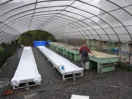 aquaponic greenhouse design