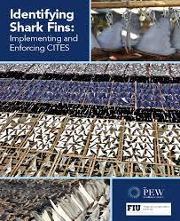 Identifying Shark Fins