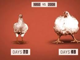 Transgenic Animals Transgenic Animals By Will Vestal Infographic