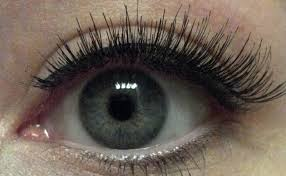 eyelash curler accident. using an eyelash curler, curl your joined lashes together--i\u0027m just about to do this in the picture above. add mascara and eyeliner real lashes/lash curler accident