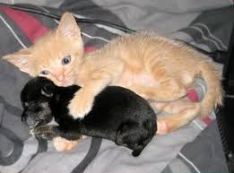 kittens and puppies and bunnies and hamsters and monkeys.  And Kitten And Puppy Are Best Friends 5 Pics In Kittens And Puppies Bunnies Hamsters Monkeys B