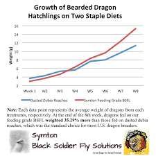 Bearded Dragon Nutrition Chart Bearded Dragons Grow Faster When Fed Bsfl Symton Black