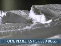 home remes for bed bugs image