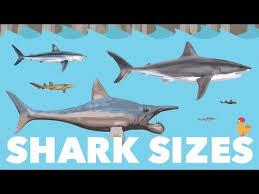Shark Size Comparison Chart Shark Size Species Comparison Youtube