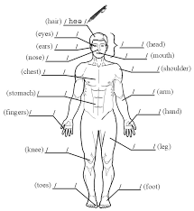 Parts Of The Body In Spanish Worksheet Free Worksheets Library ...