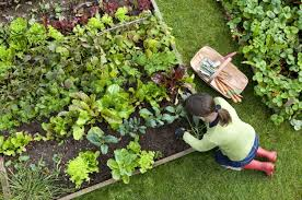 community gardening. BACKYARD TIP: Once You Harvest The Spring Veggies From Your Community Garden, Don\u0027 Gardening
