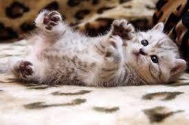 Cat Wallpaper: Cute Cat Wallpaper Hd ...