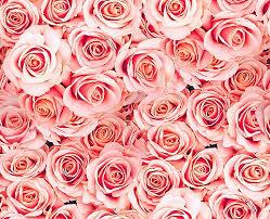 light pink floral background tumblr. Modren Floral Image For Awsome Pink Flower Background With Light Floral Tumblr P