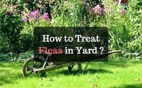 flea infestation yard. Fleas In Yard Flea Infested How To Treat Infestation N