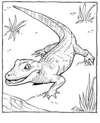 alligator coloring pages photos zoo coloring pages printable coloring pages coloring sheets free
