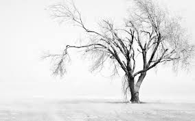 Tree Wallpapers Black And White ...