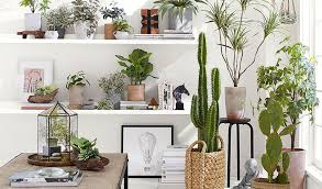 7 Indoor Plant Ideas to Bring Outside In