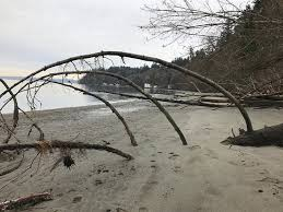 Dash Point Wa Tide Chart Great Trail System For Hiking Dog Walking Review Of Dash