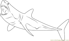 Small Picture Great White Shark Diving Coloring Page Free Shark Coloring Pages