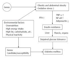 Diabetes Type 2 Pathophysiology Flow Chart Oxidative Stress Insulin Resistance Dyslipidemia And Type