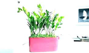 great indoor plants new best large indoor plants low light for tall indirect inspirational house leaf