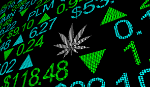 Charlotte S Web Stock Chart These 3 Marijuana Stocks Are Flailing Strong Buy Signals