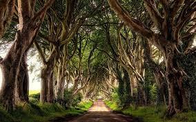 Ireland Forest Desktop Wallpapers - Top ...
