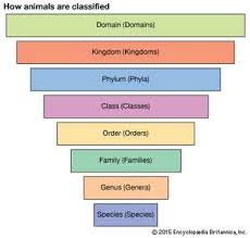 Taxonomy Definition Examples Levels Classification