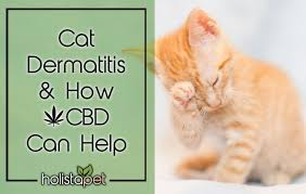 Using Cbd For Cat Dermatitis Naturally Stops Itching Flaking