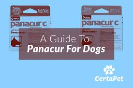 A Guide To Panacur C Panacur For Dogs Certapet