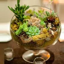 Mini Succulent Garden in Glass Bowl. indoor succulent ideas