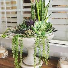 Cleo Bird Bath Planter | Succulent garden design, Bird bath planter, Plant  decor