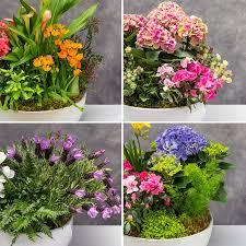 mcardle s custom indoor container garden