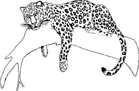 Collection Of Jaguar Coloring Pages For Preschoolers Download Them