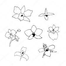 черно белые векторные иллюстрации линия орхидеи набора векторное