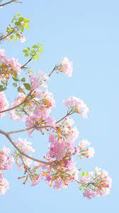 Pastel Aesthetic Flower Wallpapers ...