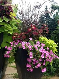 potted outdoor plants full sun full sun potted flowers flower pots outdoor full sun pixels container