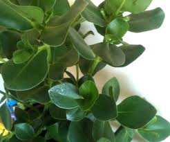 top common indoor house plants awesome tropical exotic with names pictures of houseplants