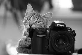 نتیجه تصویری برای دوربین های عکاسی