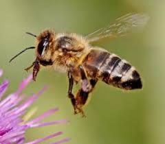 Image result for beekeepers thornbridge