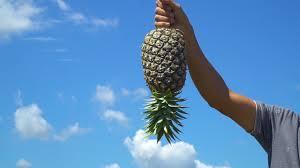 Pineapple Farm Jalan Jalan Our Grandfather Story