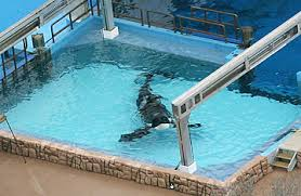 tilikum isolated. Exellent Isolated Inside Tilikum Isolated L
