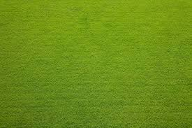grass field from above. Evergreen Grass Texture Background Stock Photo Field From Above