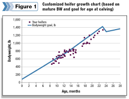 Dairy Heifer Growth Chart Precision Feeding Dairy Heifers Progressive Dairy Canada