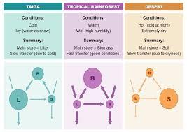 Taiga Temperature Chart Ecosystem Analysis Bioninja