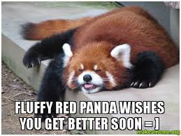 Fluffy Red Panda wishes you get better soon = ] - | Make a Meme via Relatably.com