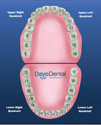 How To Count Teeth Chart Teeth Numbers And Names Human Teeth Chart