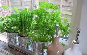 Herb Garden Kitchen Kitchen Wall Indoor Herb Garden The Advantages Of Indoor Herb