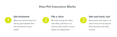 Pet Insurance 101: Types, Cost, How to Pick a Plan - Pet Life Today