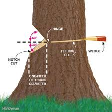 cut down a tree safely and other tree cutting tips family handyman