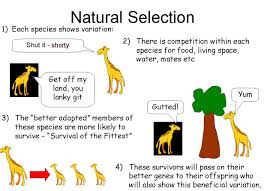 Darwin And Lamarck Powerpoint A Summary Of Lamarcks And