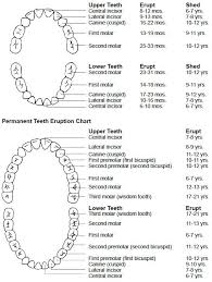 Teeth Letters And Numbers Google Search Dental Pinterest