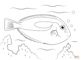 Tropical Fish Coloring Pages Tropical Fish Surgeon Fish Coloring