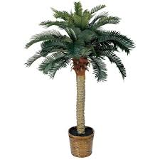 Decorative Indoor Trees Bloomsz Olive Tree In Decorative Planter 00412 The Home Depot